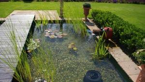 Wasser im Garten - Naturpools & Schwimmteiche